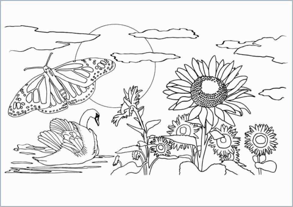 Nature Coloring Pages For Adults Free Download With Images