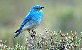 Preciosas las aves.