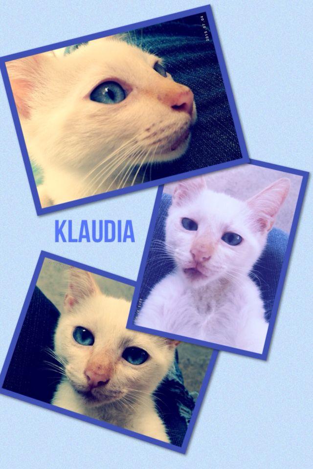 No le gusta que le tome fotos los otros son mas relajados o será que esta creciendo?. :) #gatitos