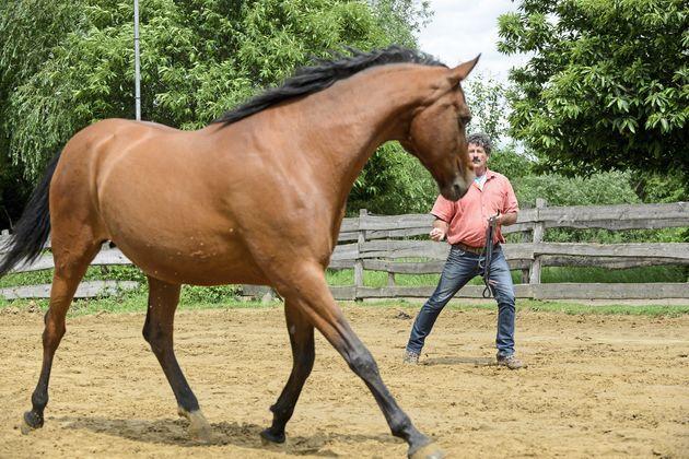 Photo of Werden Sie unwiderstehlich für Ihr Pferd: 6 Übungen für mehr Beziehung statt Kontrolle