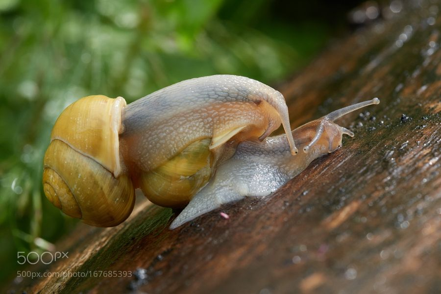 snail dance by bokeolaolao. @go4fotos