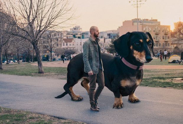 Man Photoshops Dachshund To The Size She Thinks She Is Giant