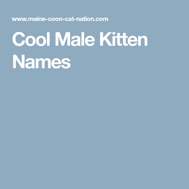 Cool Male Kitten Names Kitten Names Kitten Names Boy Boy Cat Names