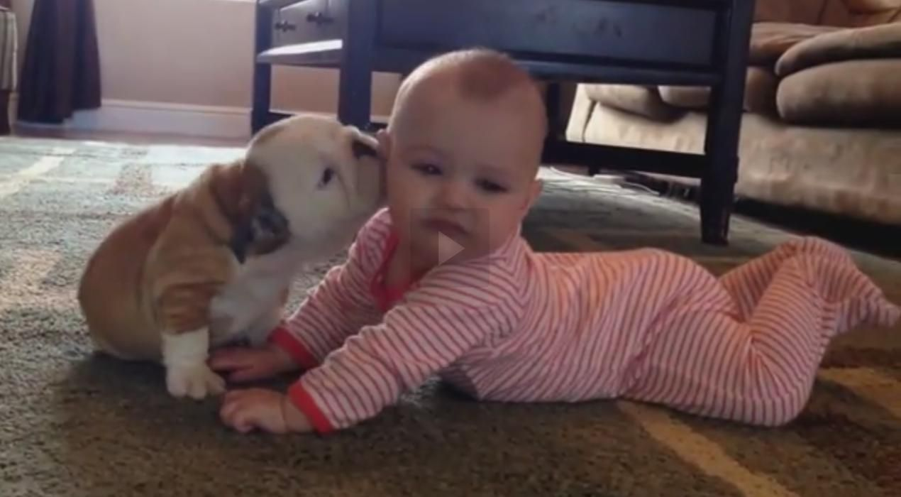 Bulldog Puppy Kissing Human Baby Dogs And Kids Puppy Kisses