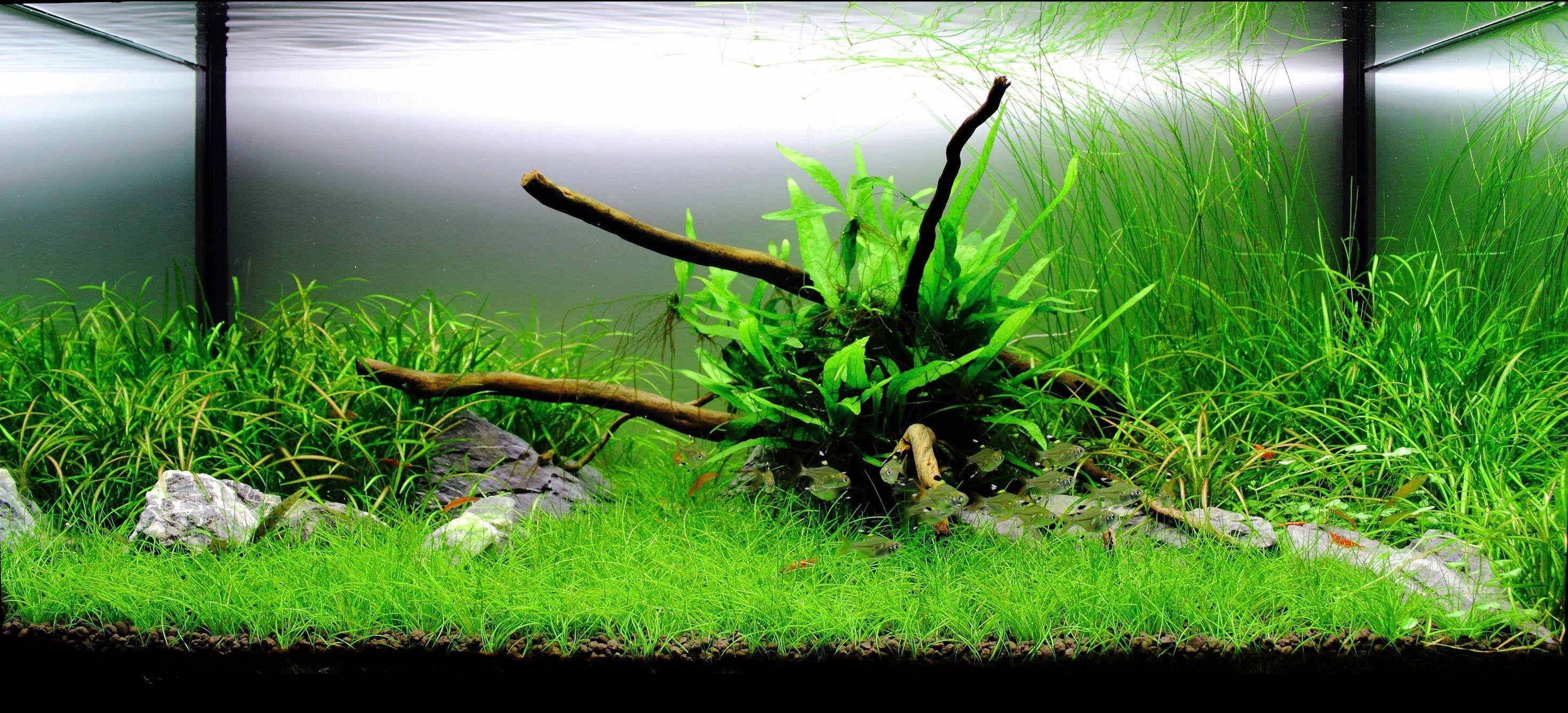 plant aquarium design photo design aquarium pinterest - Freshwater Aquarium Design Ideas