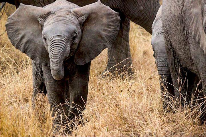 Spotting the Big 5 of Serengeti National Park