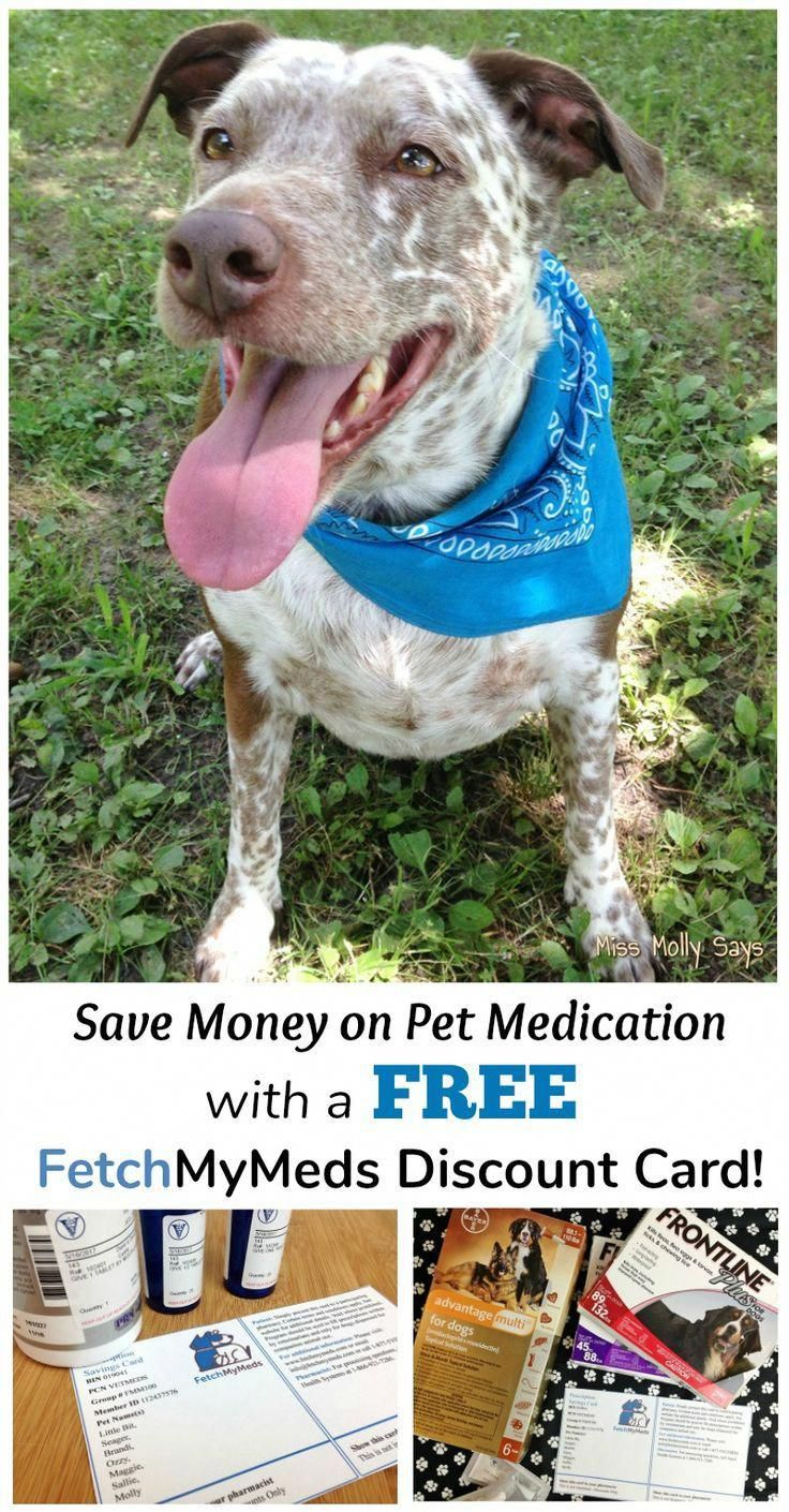 Nutrition And Dietetics Pet medications, Pets, Dog