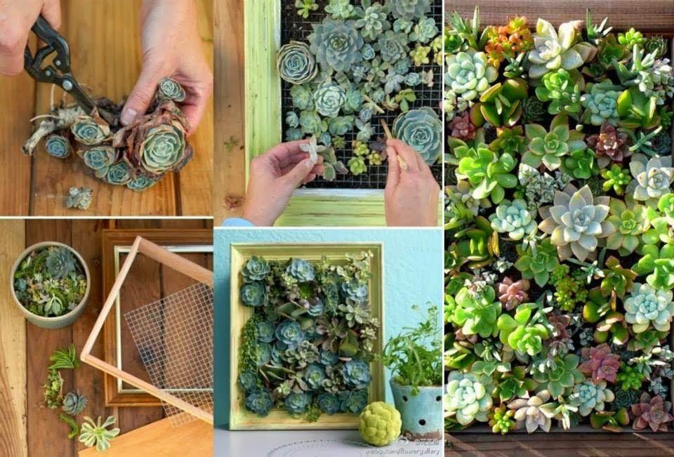 30 Ideas creativas con plantas para decorar tu hogar y jardín - plantas para jardin