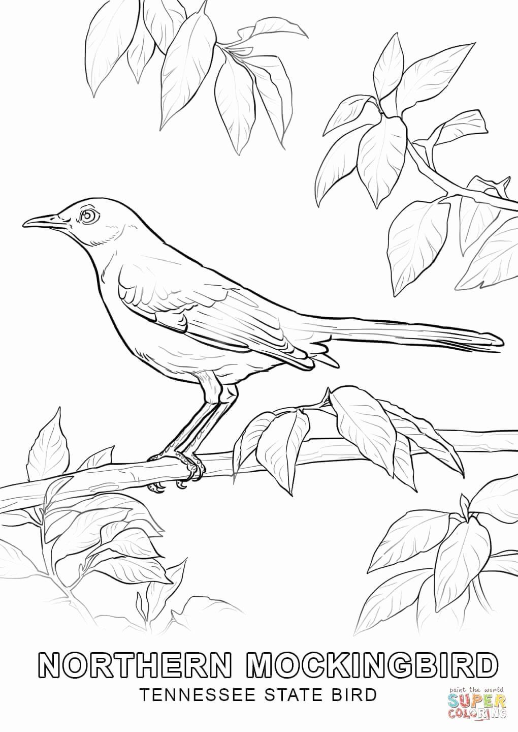 Alabama State Flower Coloring Page Beautiful Best Tennessee State