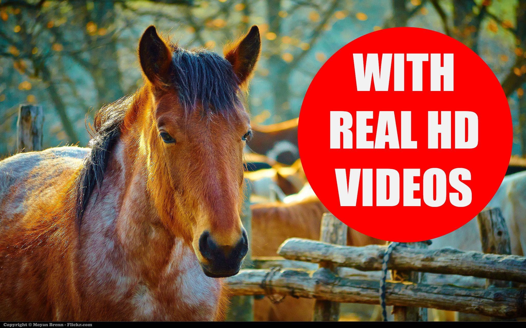 This educational video teaches children popular farm
