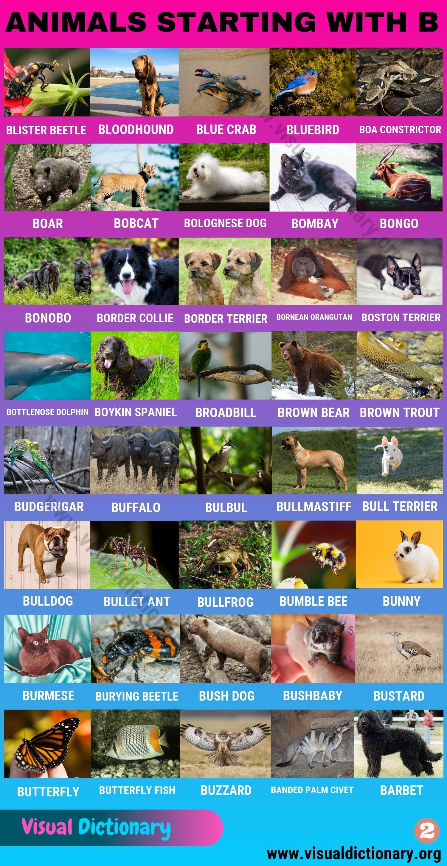 Animals That Start With B 80 Intriguing Animals Starting With B Visual Dictionary Animals Starting With B Animals Name In English Visual Dictionary