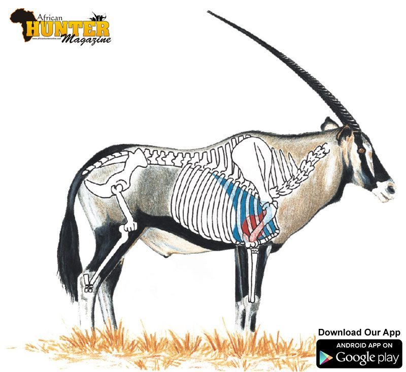 Gemsbok-Oryx-shot-placement | Shot Placement and Anatomy - Where to ...