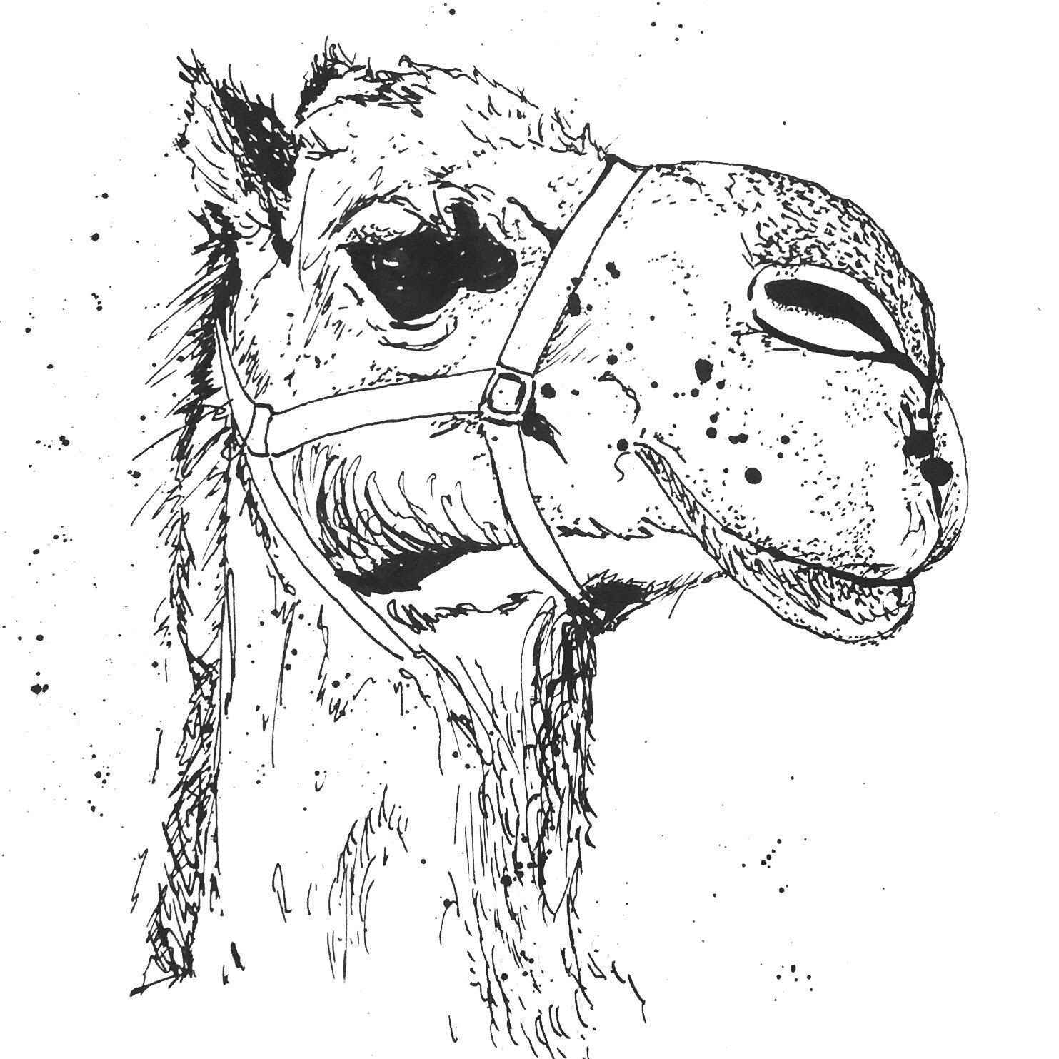 This is an image of Exhilarating Camel Head Drawing