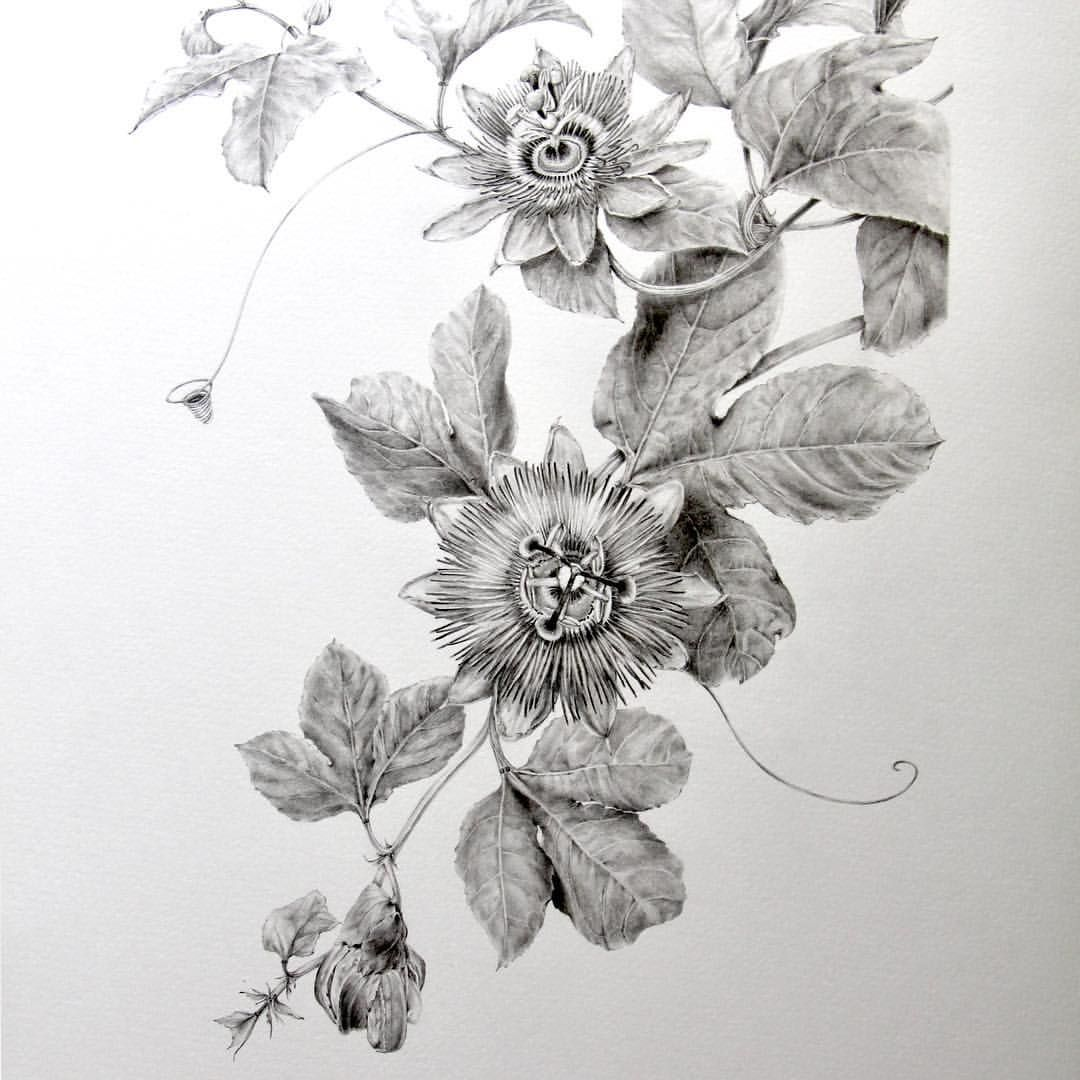 Passiflora Completed Tried My Hand At A Simple Botanical Composition This Time My Doubts Arose When Flower Sketches Botanical Painting Art Sketches
