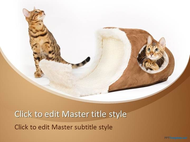 Free cat bed ppt template animal ppt templates pinterest ppt free cat bed ppt template toneelgroepblik Images