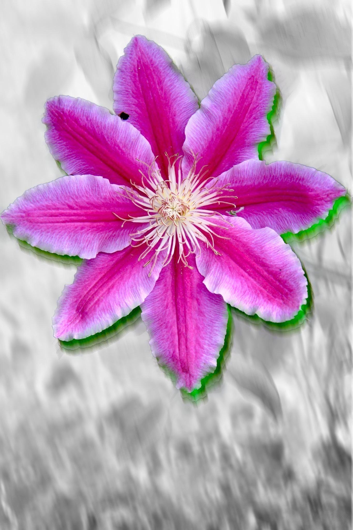 Epingle Par Philippe Perdrial Sur Fleurs Fleurs