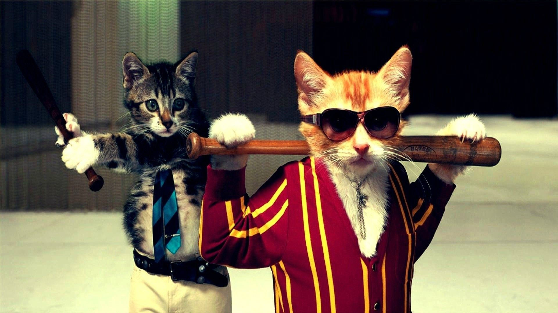 Gang Cats Wallpaper Funny Cat Wallpaper Cat Animal Pictures Funny Cat Images