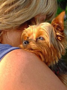 20 Things All Yorkie Owners Must Never Forget. The Last One Brought Me To Tears...
