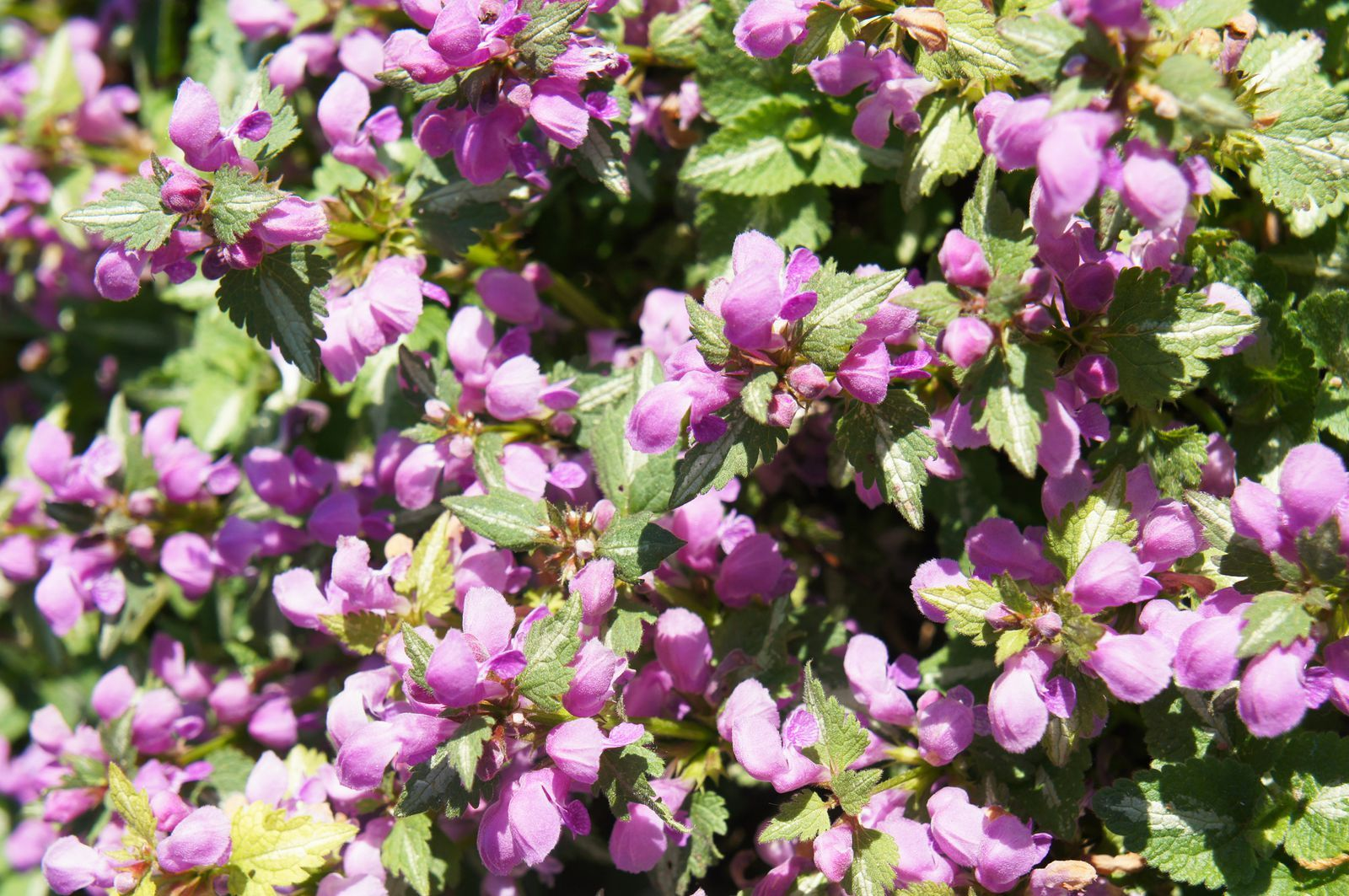 These Shade Plants Will Brighten Any Dark Corner of Your