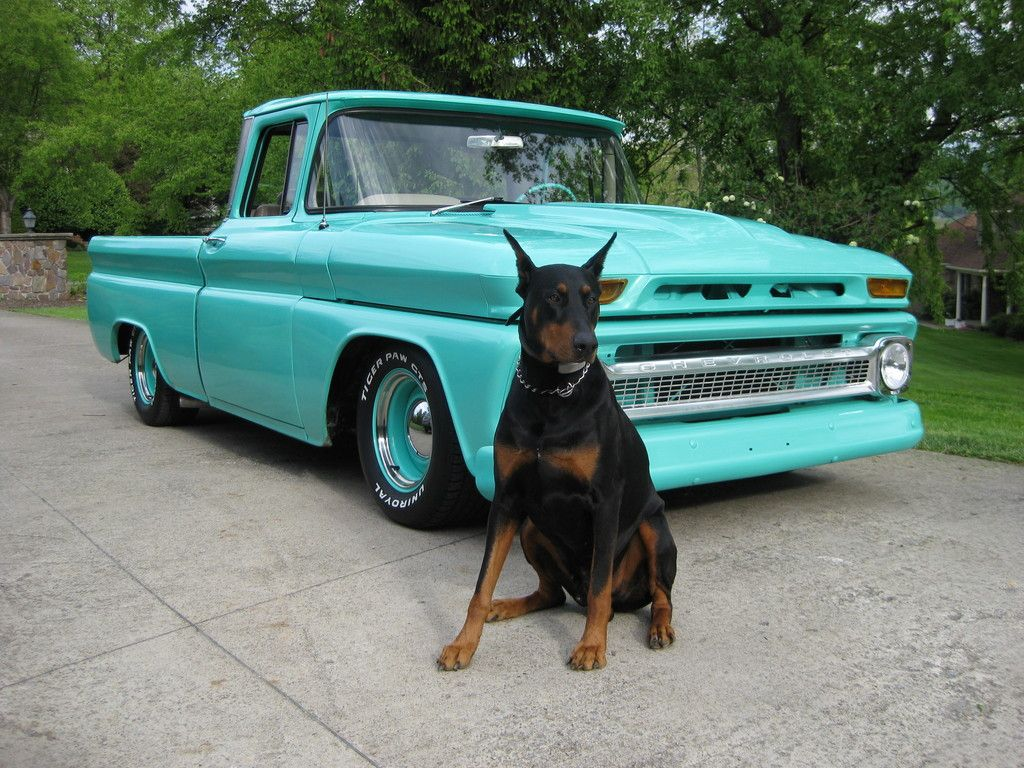 Dobie And A Custom Chevy Truck What More Does A Girl Need Oh 3