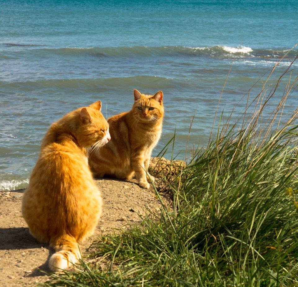 проблема картинки котята в море диагноз как