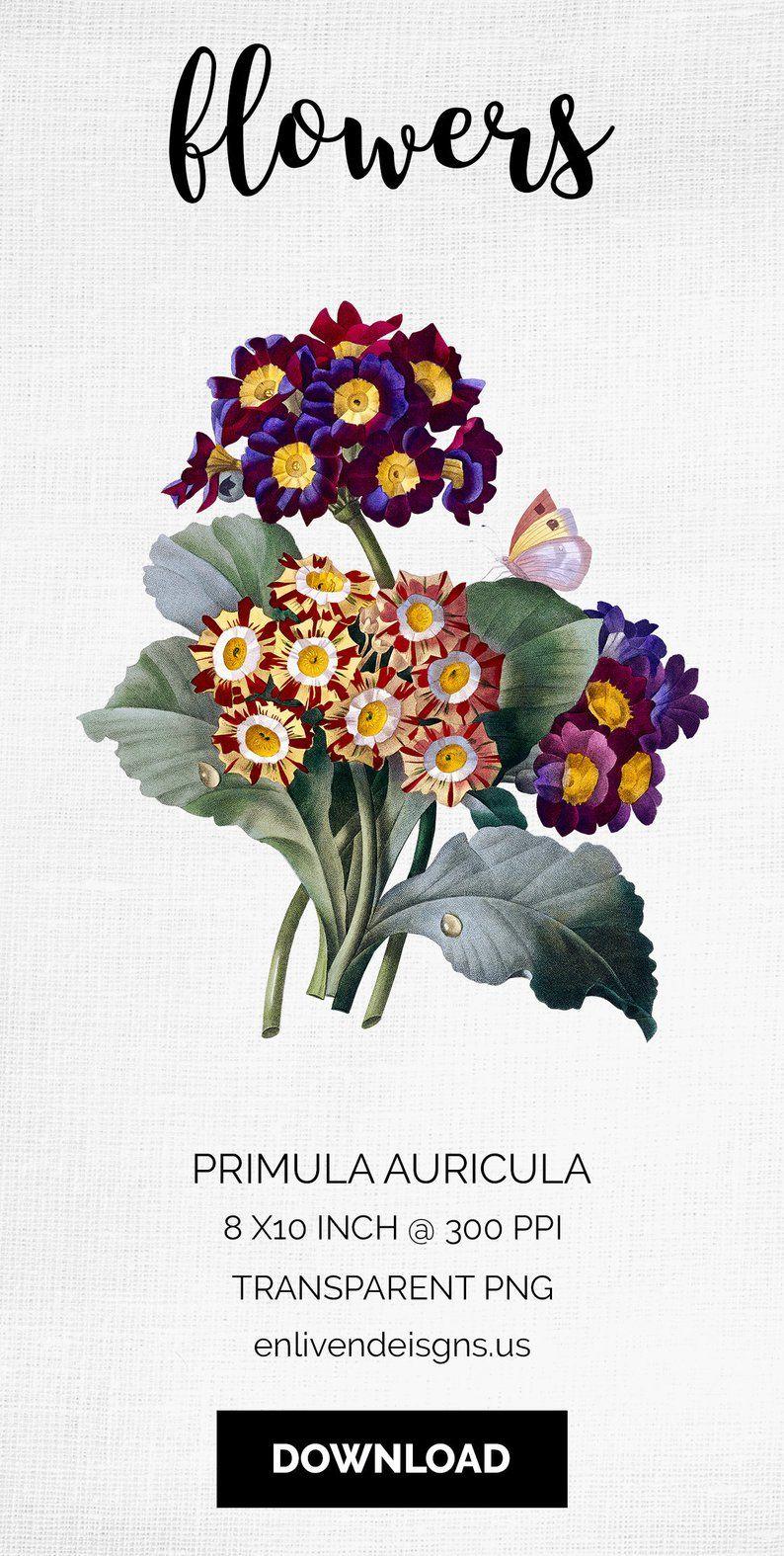 primula auricula flower bouquet clip art printable art vintage rh pinterest com