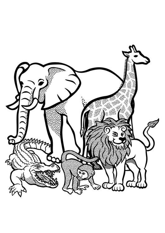 Dibujo Para Colorear Animales En Libertad En 2019 Animales