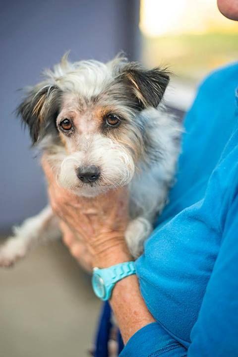 Via The Animal Welfare League Of Queensland Australia Animal Id 23254 Jamie A 2 Years Old Jack Animal Welfare League Australia Animals Dog Adoption