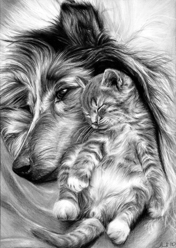 40 Realistic Animal Pencil Drawings Drawings And