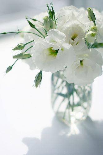 White Lisianthus Flores Plantas Blumen Schone Blumen Weisse Blumen