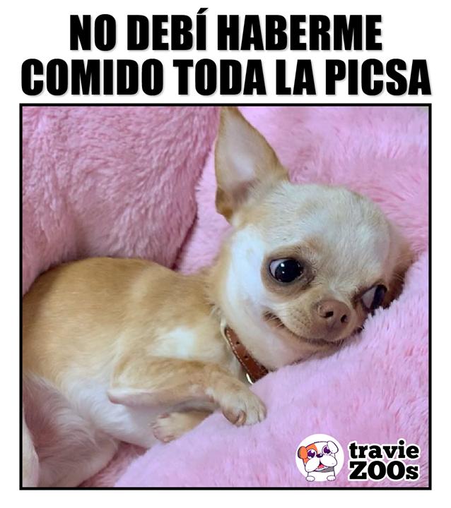 Me Duele La Panza Memes Divertidos Perros Lindos Fotos De Animales