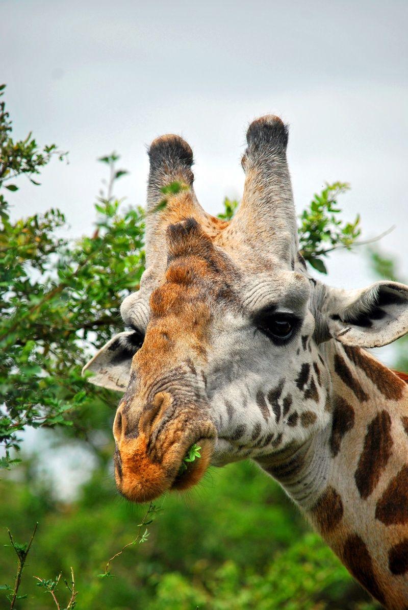 photo essay wildlife nairobi national park animals and photo essay wildlife nairobi national park