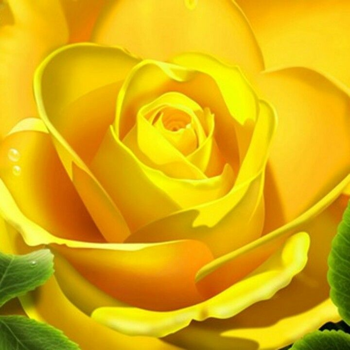 Pin By Mariam Joseph On Rose Pic Yellow Roses Yellow Flower Wallpaper Beautiful Roses