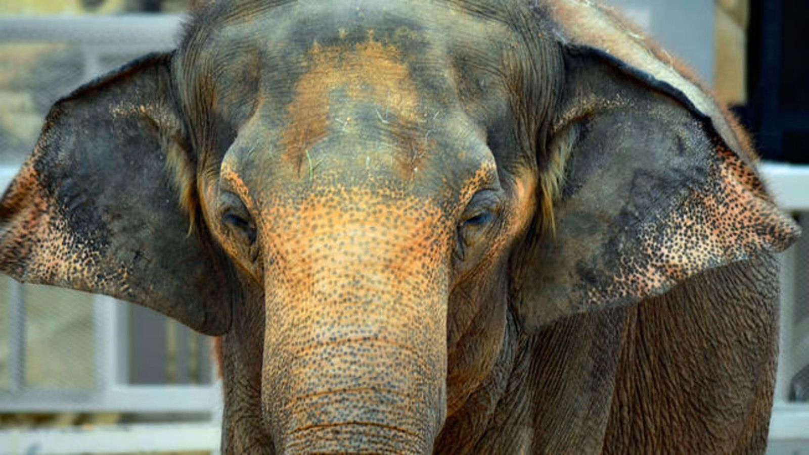 Top 10 Worst Zoos For Elephants…Why in the World Are They
