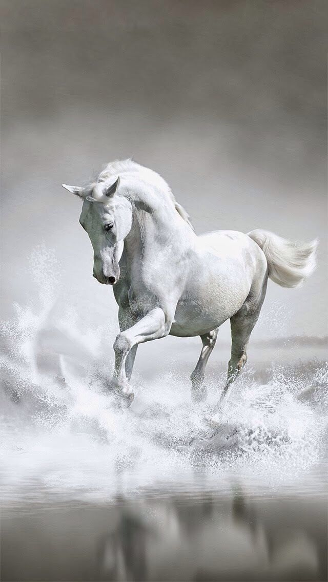 This Is A Photo Of Beautiful Horse In The Water Paint Horses