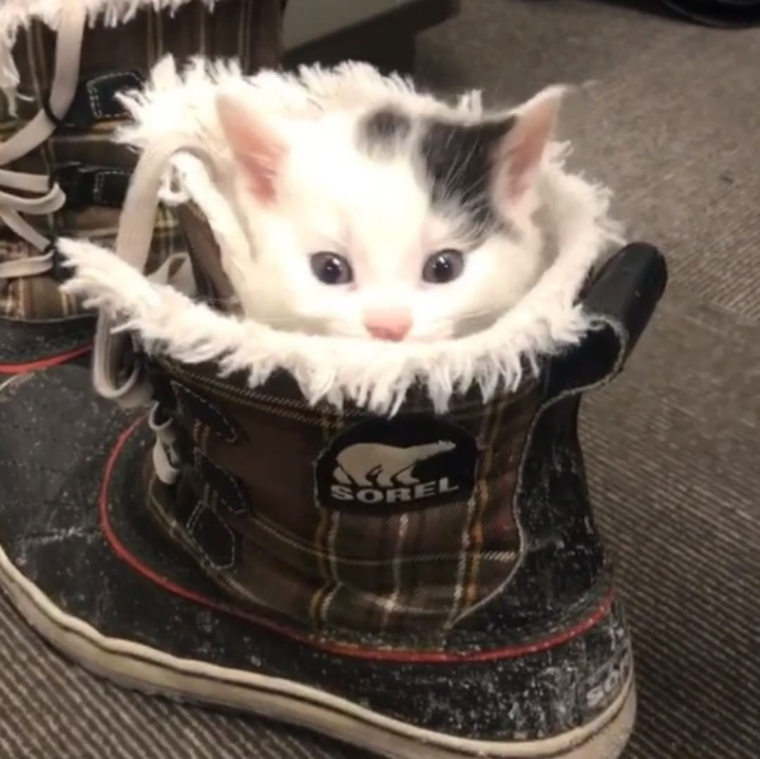 When It S A Bit Chilly Some Kittens Get Creative But It S This Delightful All Year Round At Anti Cruelty Society Of Chica Cat Shelter Kittens Cat S