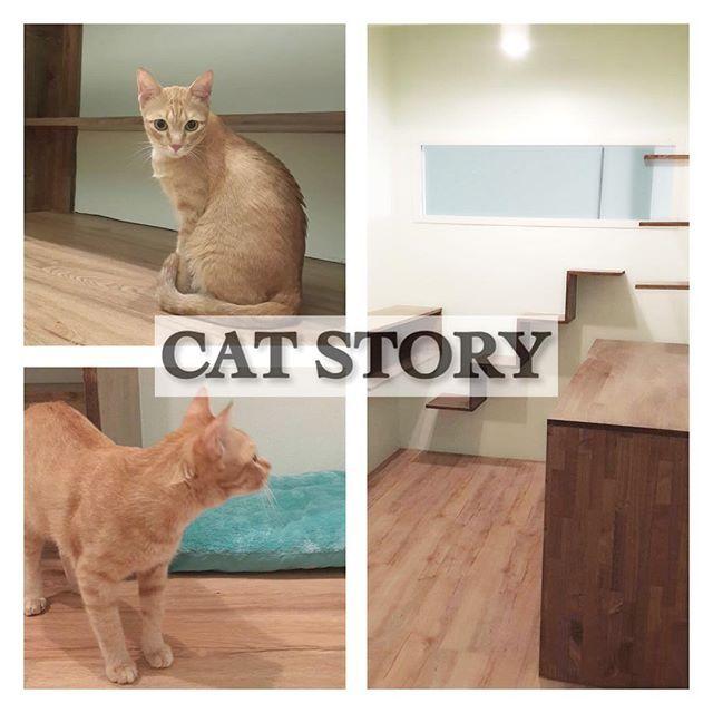 ป กพ นในบอร ด โรงแรมแมว Cat Story ร บฝากแมว Cat Hotel