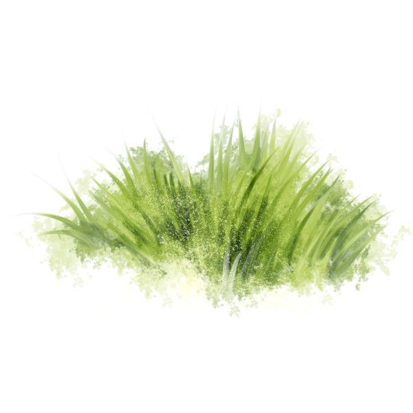 Spring Street ( 38 ).png Liked On Polyvore Featuring Grass