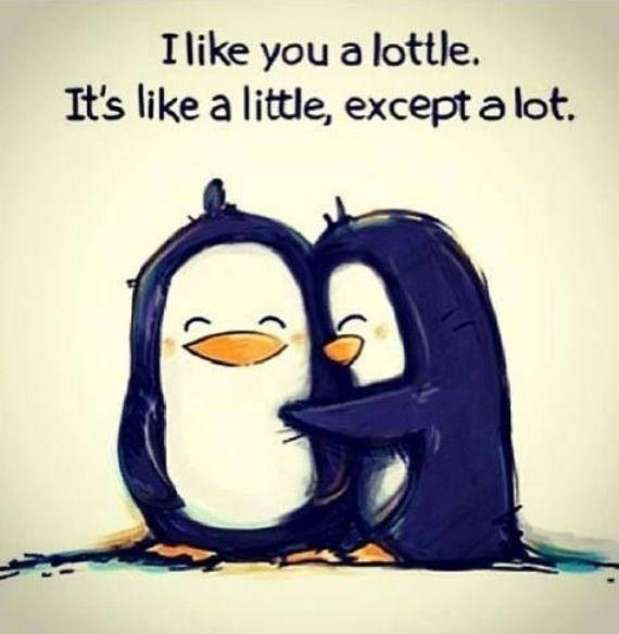580e3f79f82ee92cd7a63c572b6d9ff6 love you a lottle penguin ❤ memes pinterest relationships,Cute Penguin Meme