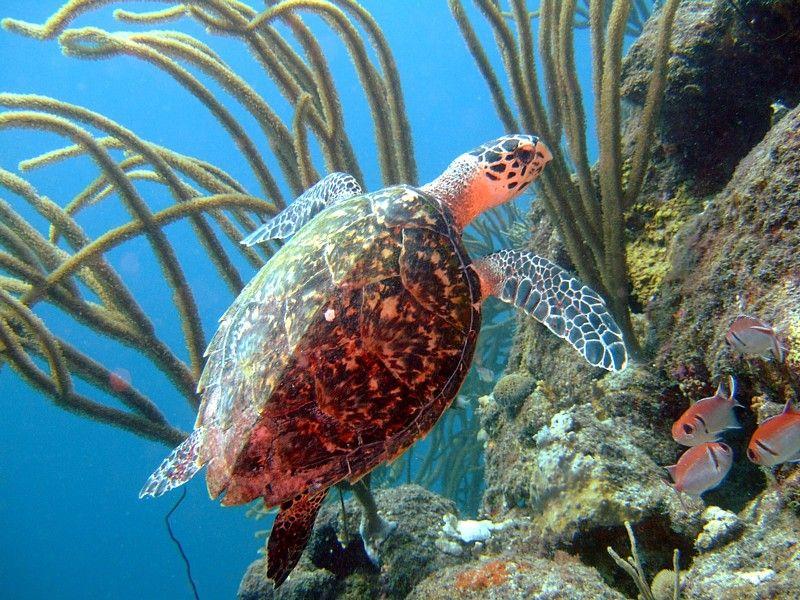 Relaxed Curacao by Bert van Essen Under the sea