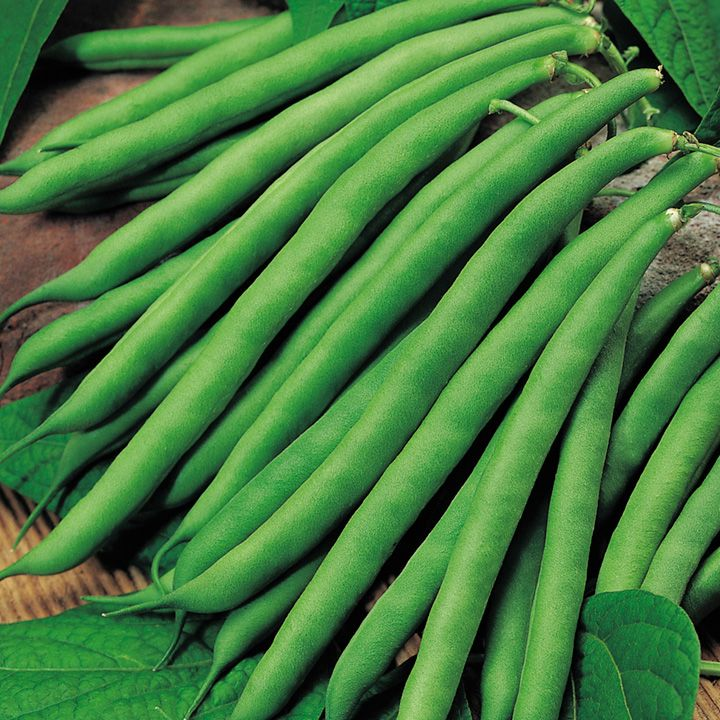 Dwarf French Bean Safari French Bean Vegetables Names With Pictures Bean Seeds