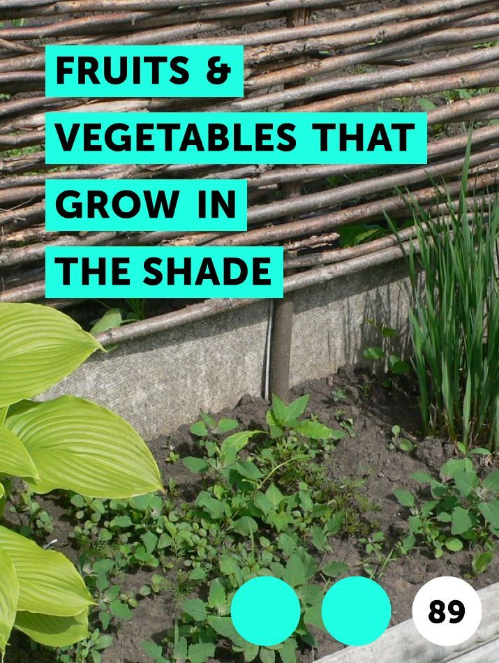 Fruits Vegetables That Grow In The Shade Shade Garden 400 x 300