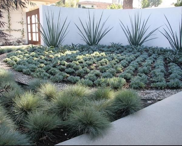 Desert Landscaping Dann Foley Interior Design American Dream