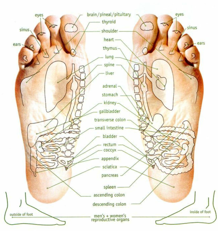 Flex points of the feet essential oils for thyroid