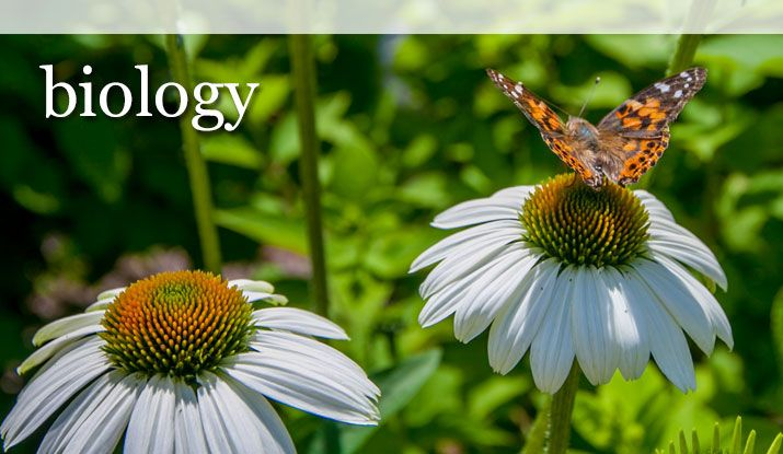 Is your major Biology? Click the site to see your requirements.