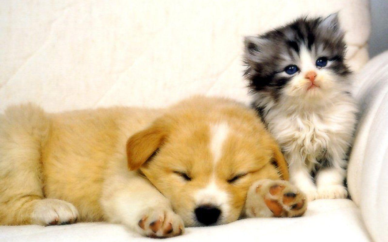 Dog And Cat Wallpaper Gatinhos E Cachorros Animais Bonitos Caes Bonitos