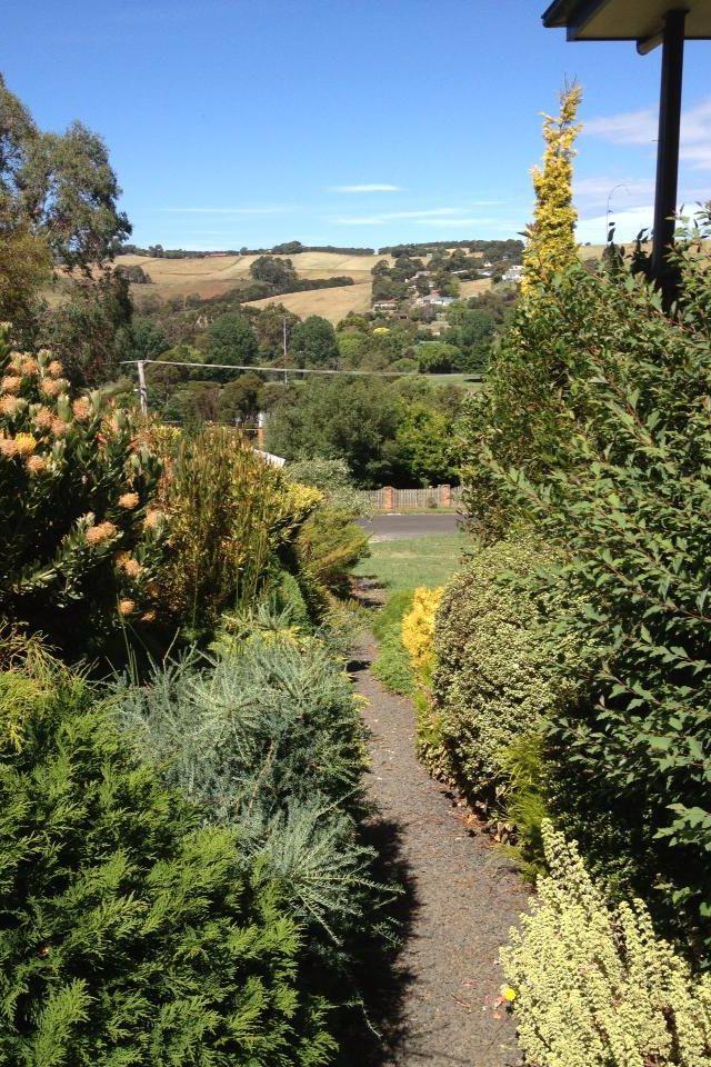Sal's neighbour's yard