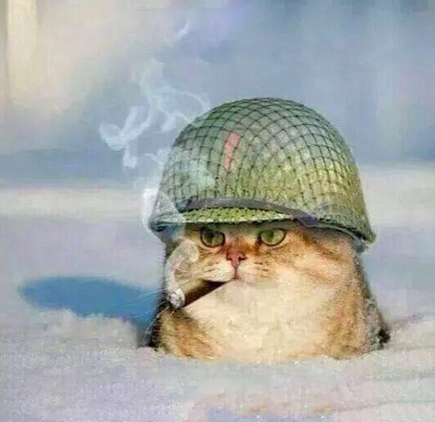 War Cat Blank Meme Template  Cats    Meme Template
