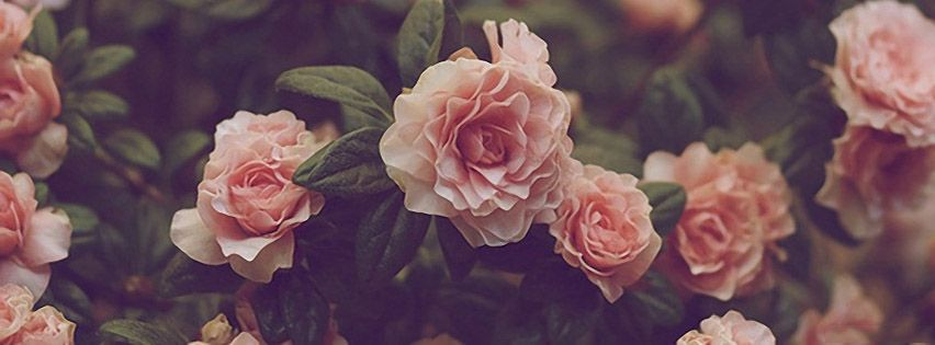 Facebook Cover Photos Nature Flowers With Quotes 5 Jpg 852 315 Facebook Cover Photos Flowers Twitter Cover Photo Facebook Cover Photos Love