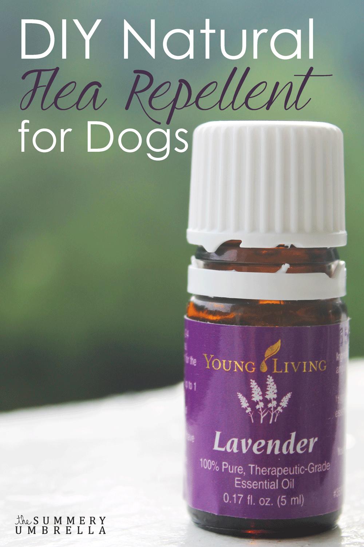 DIY Natural Flea Repellent for Dogs Essential oils for